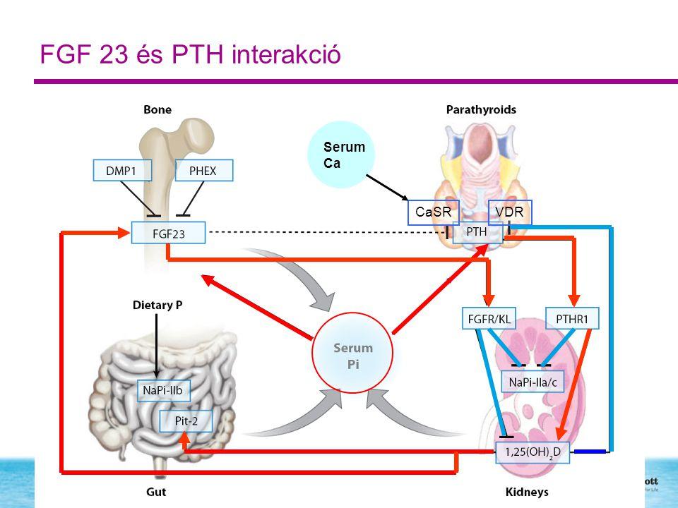 FGF 23 és PTH interakció Serum Ca CaSR VDR