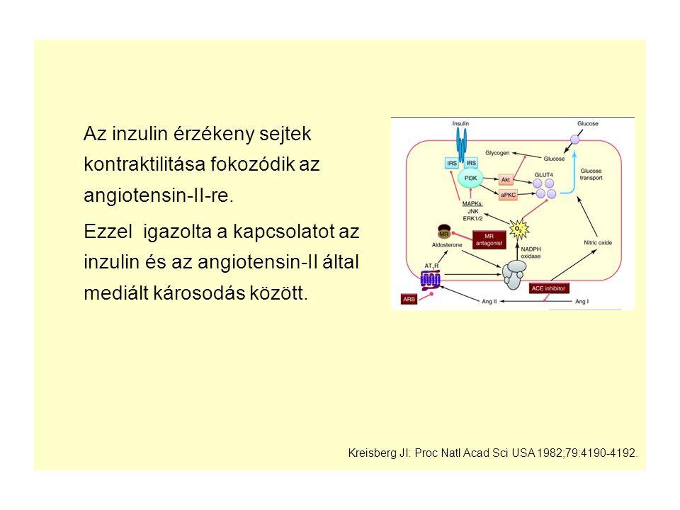 Az inzulin érzékeny sejtek kontraktilitása fokozódik az angiotensin-II-re.