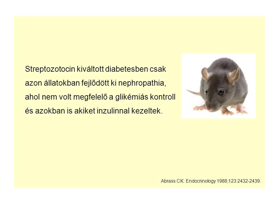 Streptozotocin kiváltott diabetesben csak azon állatokban fejlődött ki nephropathia, ahol nem volt megfelelő a glikémiás kontroll és azokban is akiket inzulinnal kezeltek.