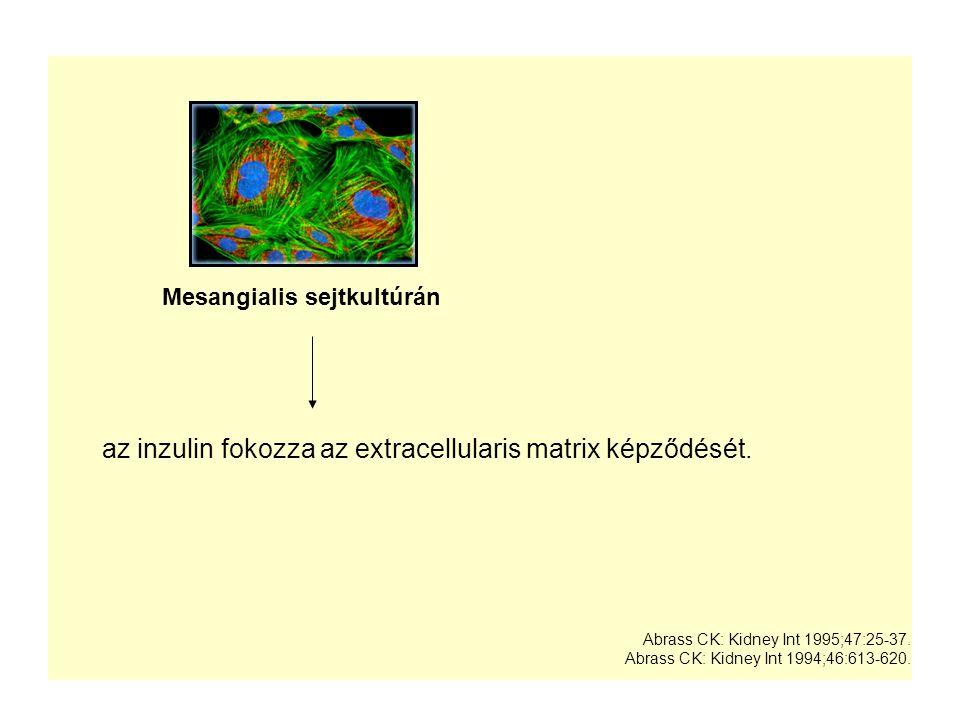 Mesangialis sejtkultúrán
