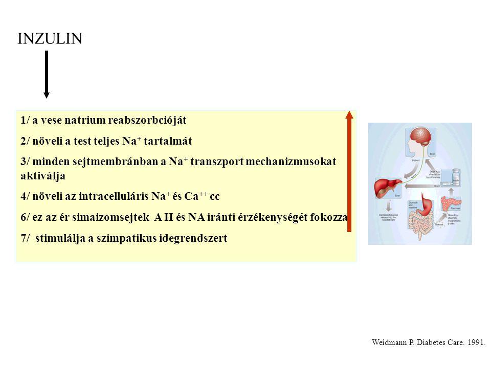 INZULIN 1/ a vese natrium reabszorbcióját