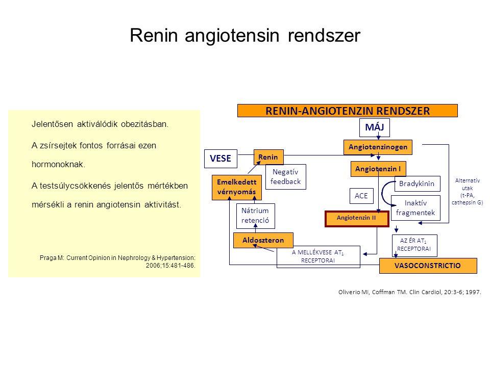 Renin angiotensin rendszer
