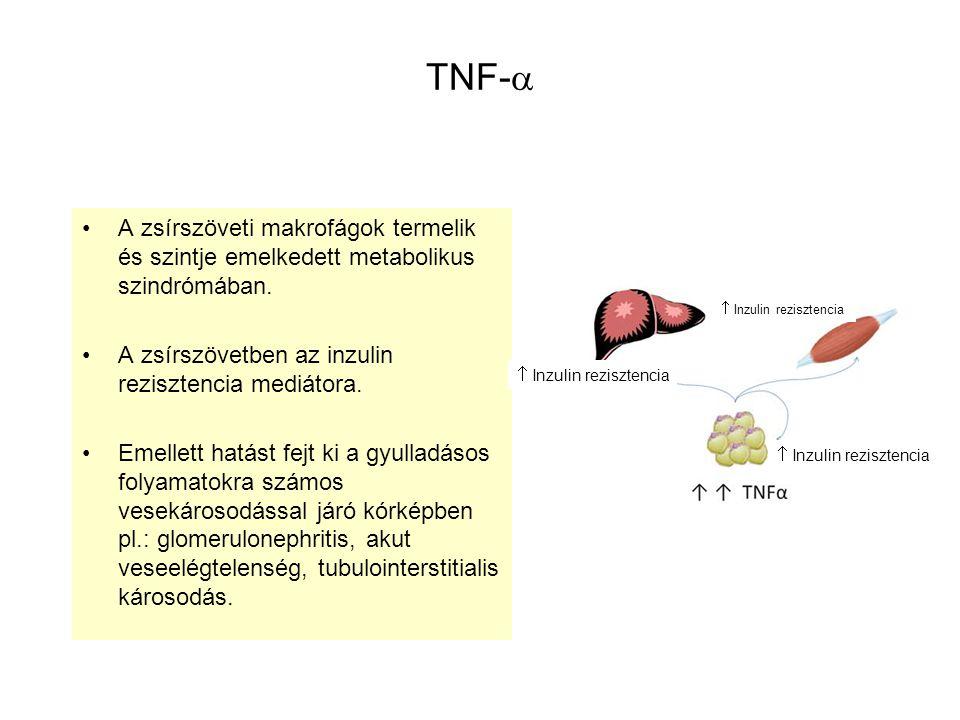 TNF- A zsírszöveti makrofágok termelik és szintje emelkedett metabolikus szindrómában. A zsírszövetben az inzulin rezisztencia mediátora.