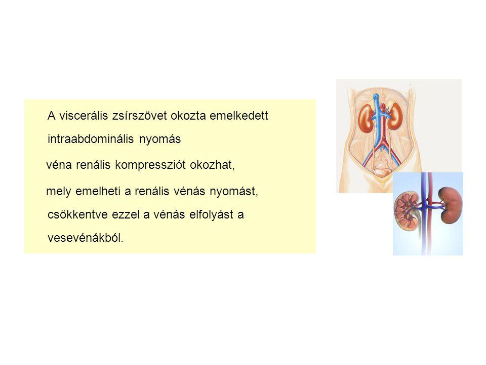 A viscerális zsírszövet okozta emelkedett intraabdominális nyomás