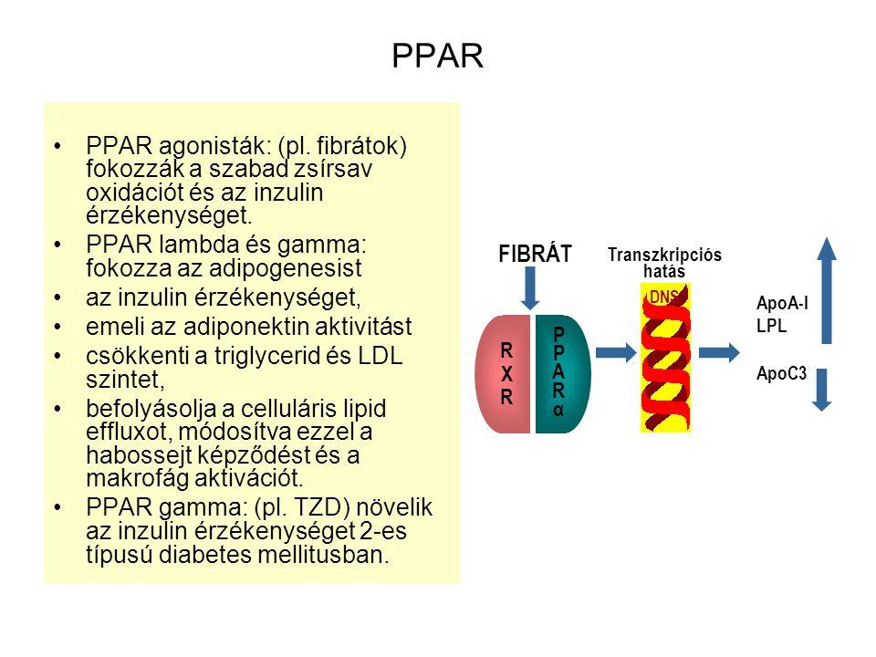 PPAR PPAR agonisták: (pl. fibrátok) fokozzák a szabad zsírsav oxidációt és az inzulin érzékenységet.