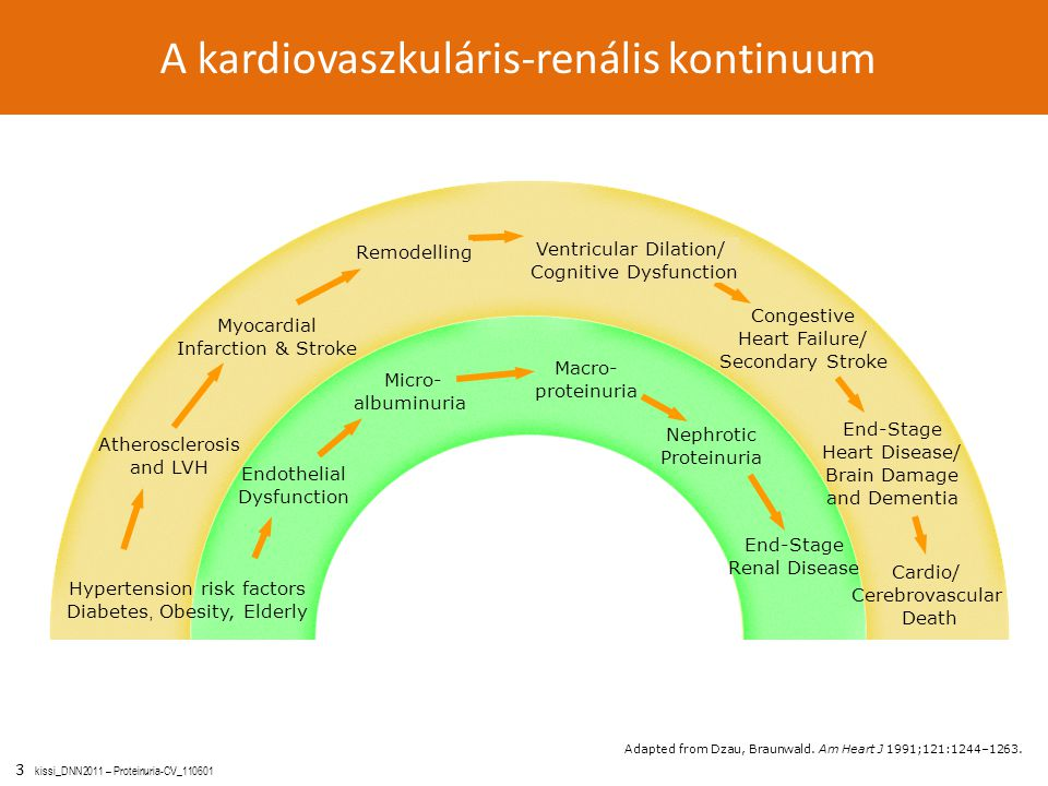 A kardiovaszkuláris-renális kontinuum