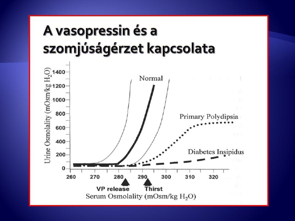 A vasopressin és a szomjúságérzet kapcsolata