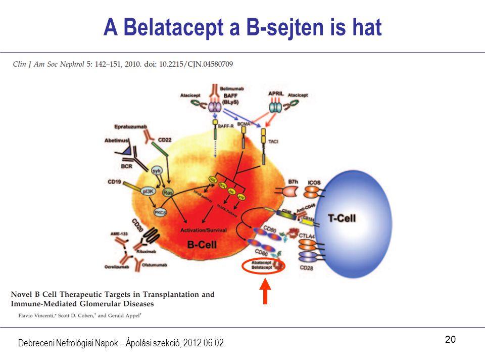 A Belatacept a B-sejten is hat