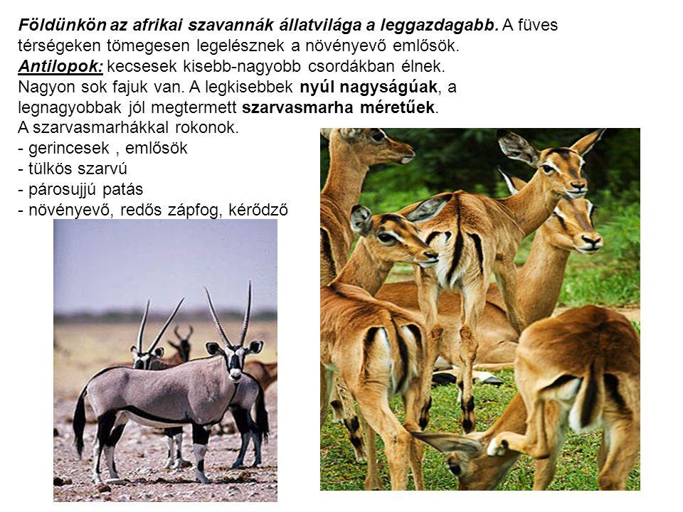 Földünkön az afrikai szavannák állatvilága a leggazdagabb