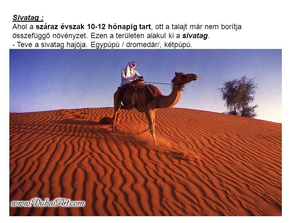 Sivatag : Ahol a száraz évszak 10-12 hónapig tart, ott a talajt már nem borítja összefüggő növényzet. Ezen a területen alakul ki a sivatag.