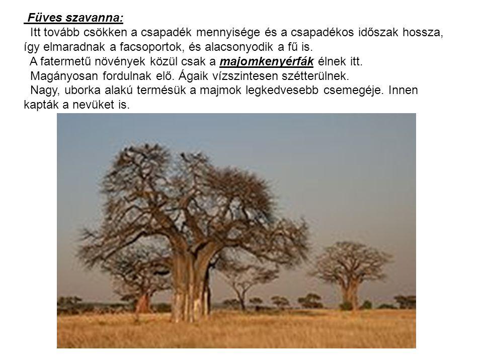 Füves szavanna: Itt tovább csökken a csapadék mennyisége és a csapadékos időszak hossza, így elmaradnak a facsoportok, és alacsonyodik a fű is.