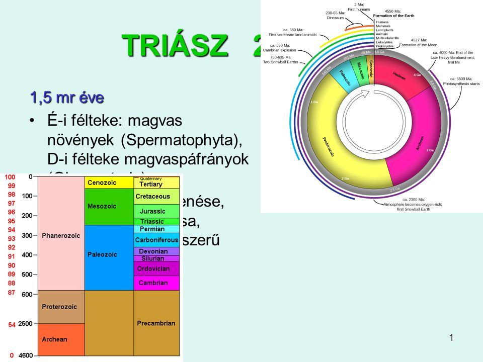 TRIÁSZ 251-200 1,5 mr éve. É-i félteke: magvas növények (Spermatophyta), D-i félteke magvaspáfrányok (Glossopteris)