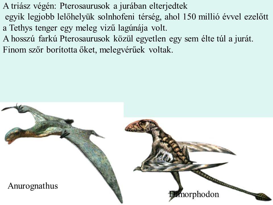 A triász végén: Pterosaurusok a jurában elterjedtek