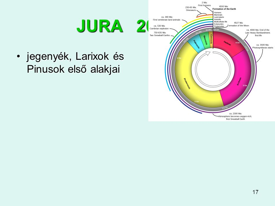 JURA 200-145 jegenyék, Larixok és Pinusok első alakjai