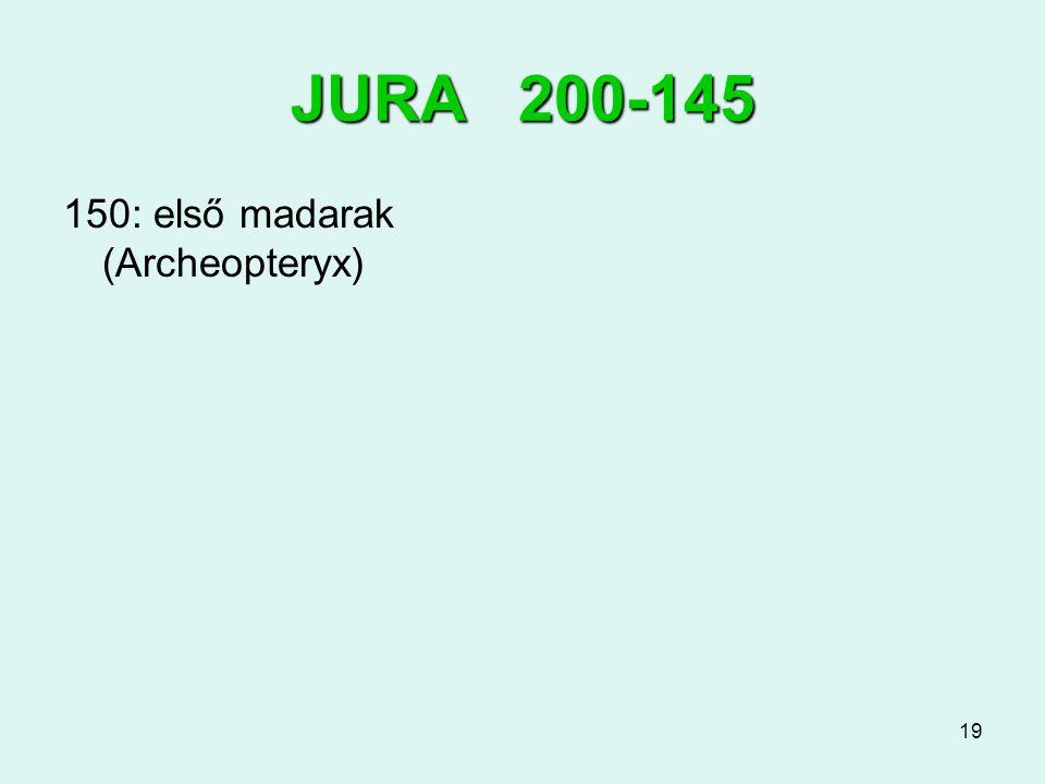 JURA 200-145 150: első madarak (Archeopteryx)