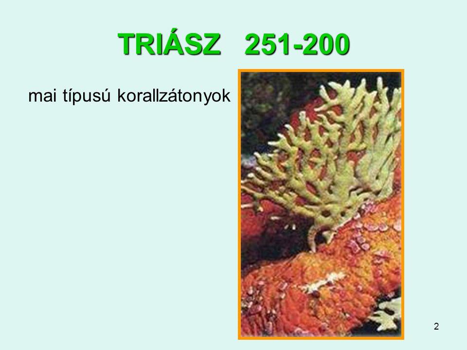 TRIÁSZ 251-200 mai típusú korallzátonyok