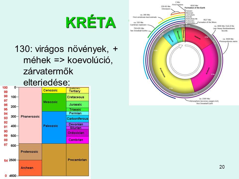 KRÉTA 145-65 130: virágos növények, + méhek => koevolúció, zárvatermők elterjedése;