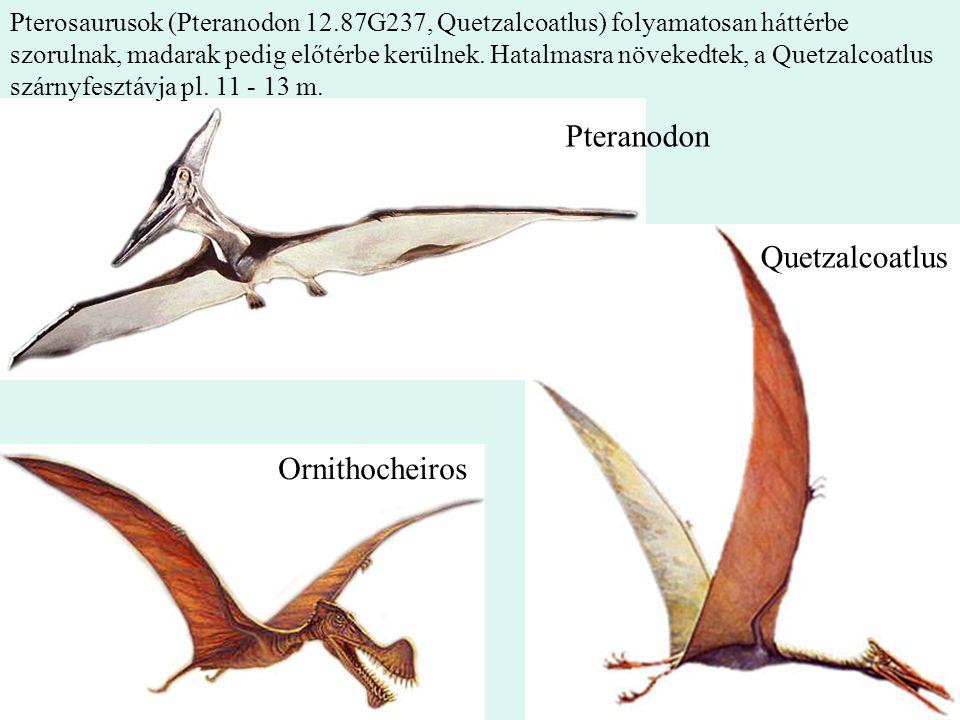 Pteranodon Quetzalcoatlus Ornithocheiros