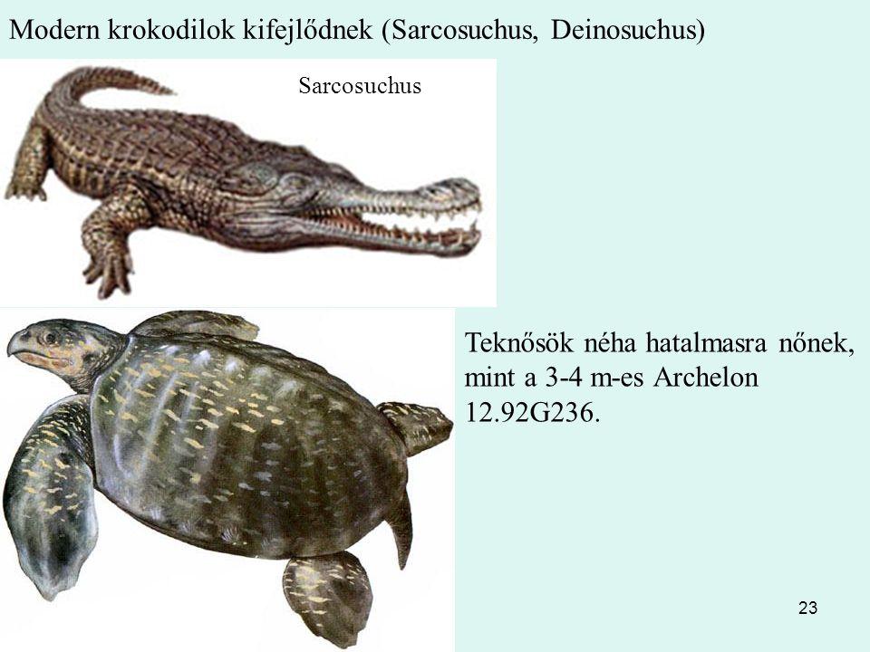 Modern krokodilok kifejlődnek (Sarcosuchus, Deinosuchus)