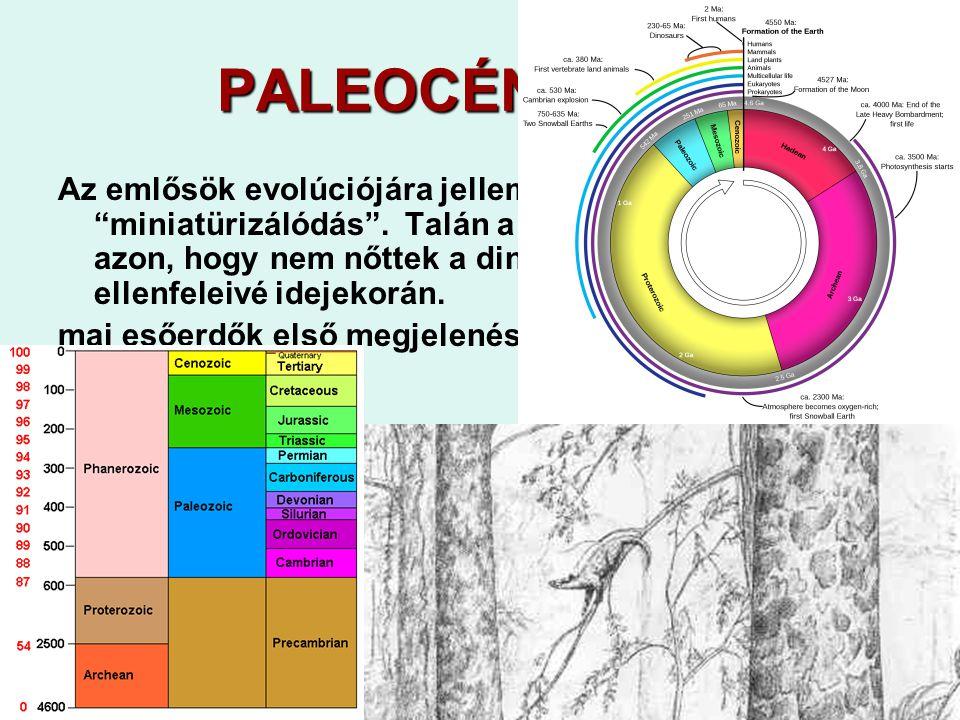 PALEOCÉN 65-55