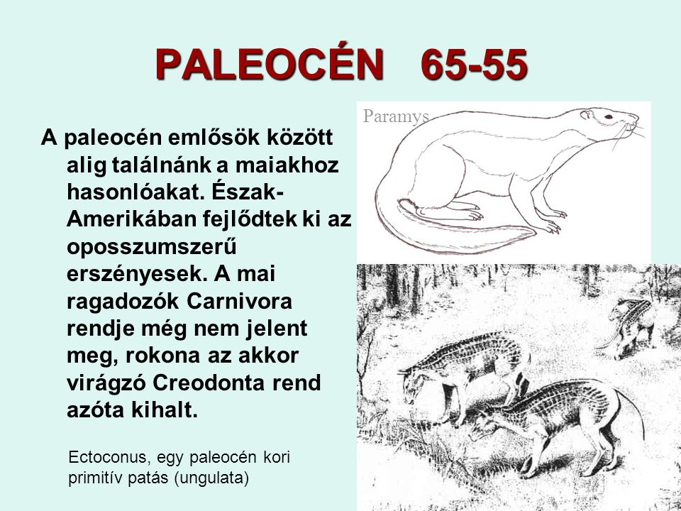PALEOCÉN 65-55 Paramys.
