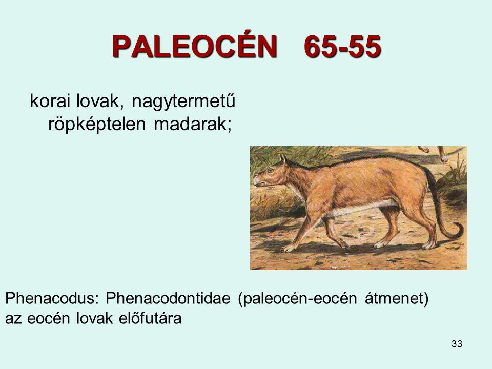 PALEOCÉN 65-55 korai lovak, nagytermetű röpképtelen madarak;
