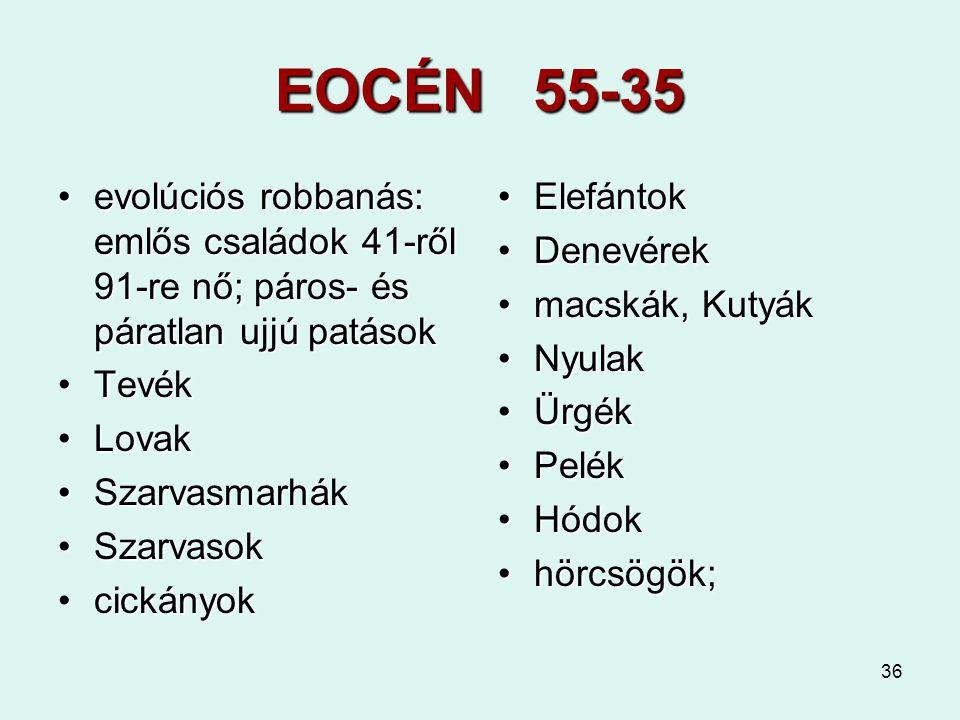 EOCÉN 55-35 evolúciós robbanás: emlős családok 41-ről 91-re nő; páros- és páratlan ujjú patások. Tevék.