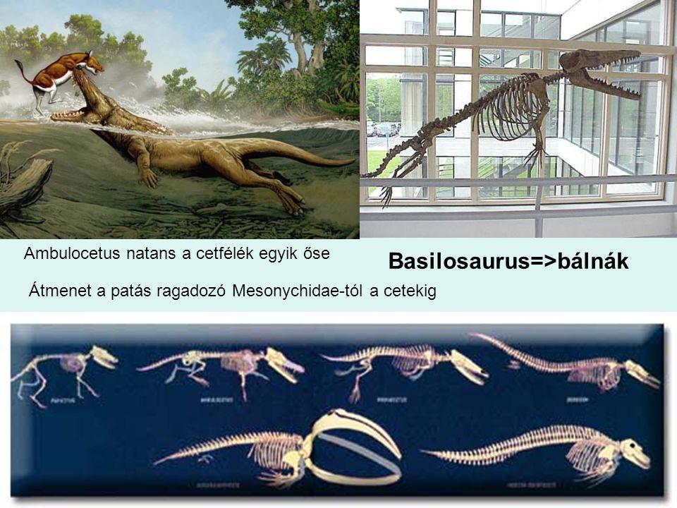 Basilosaurus=>bálnák