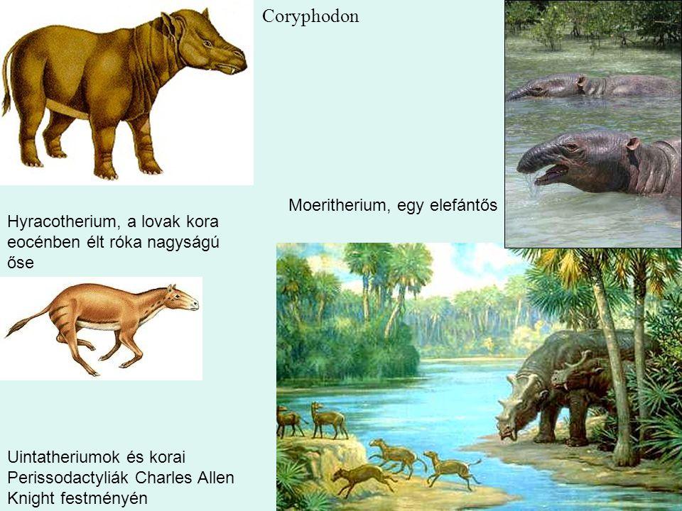Coryphodon Moeritherium, egy elefántős