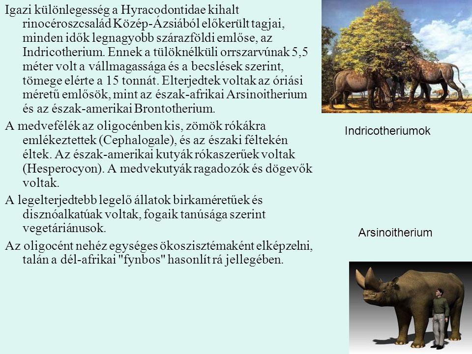 Igazi különlegesség a Hyracodontidae kihalt rinocéroszcsalád Közép-Ázsiából előkerült tagjai, minden idők legnagyobb szárazföldi emlőse, az Indricotherium. Ennek a tülöknélküli orrszarvúnak 5,5 méter volt a vállmagassága és a becslések szerint, tömege elérte a 15 tonnát. Elterjedtek voltak az óriási méretű emlősök, mint az észak-afrikai Arsinoitherium és az észak-amerikai Brontotherium.