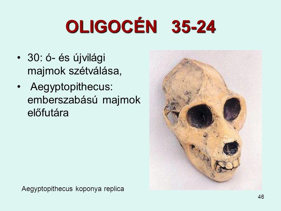 OLIGOCÉN 35-24 30: ó- és újvilági majmok szétválása,
