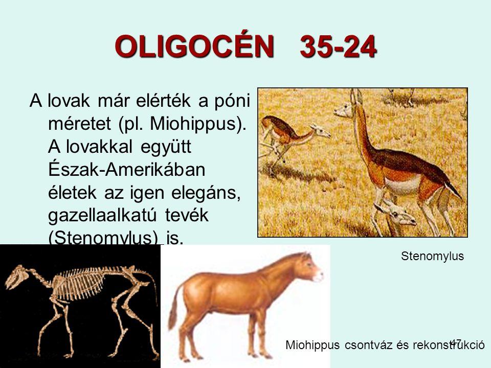 OLIGOCÉN 35-24