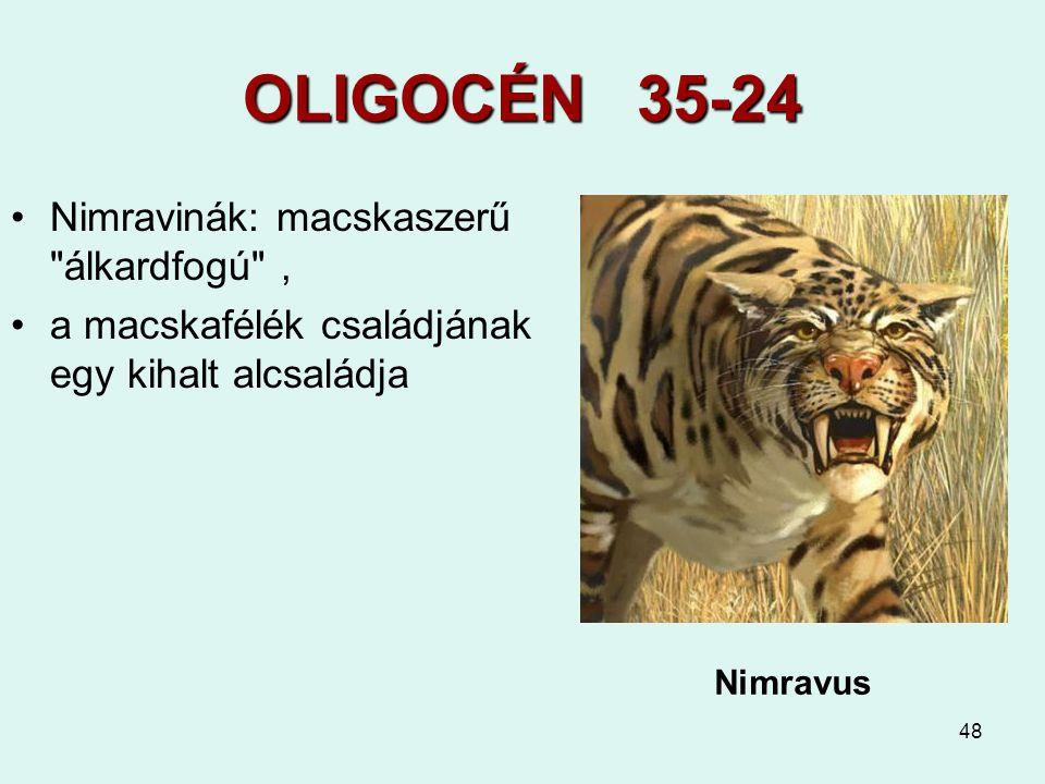 OLIGOCÉN 35-24 Nimravinák: macskaszerű álkardfogú ,