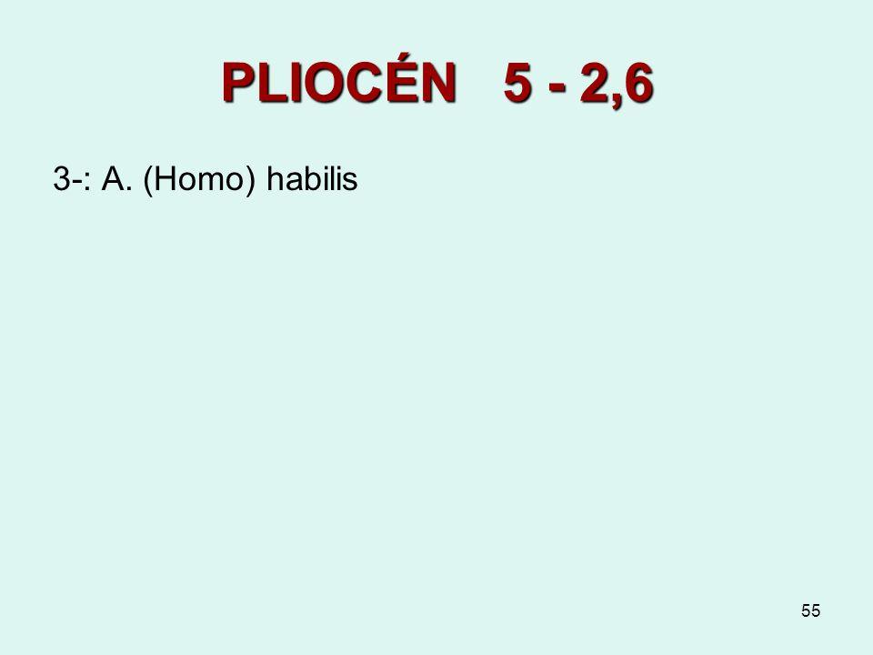 PLIOCÉN 5 - 2,6 3-: A. (Homo) habilis