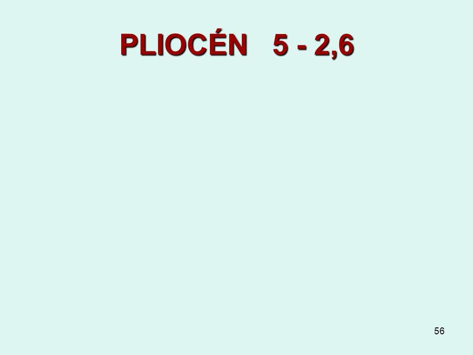 PLIOCÉN 5 - 2,6