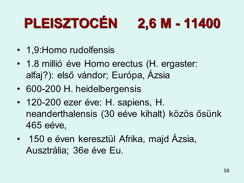 PLEISZTOCÉN 2,6 M - 11400 1,9:Homo rudolfensis