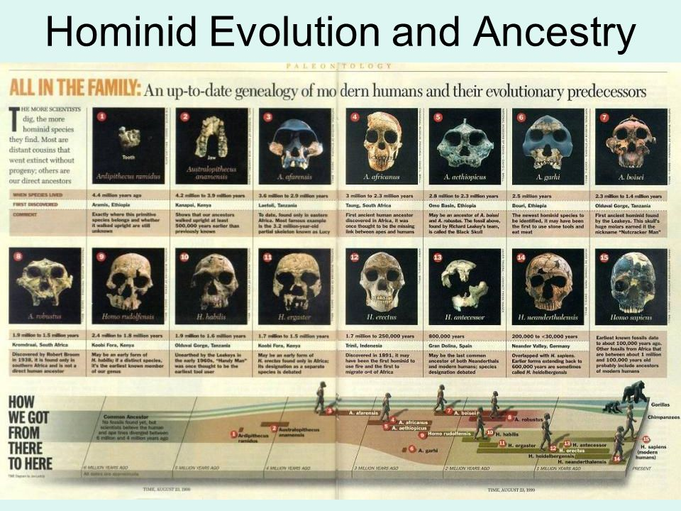 Hominid Evolution and Ancestry