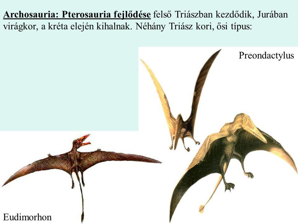 Archosauria: Pterosauria fejlődése felső Triászban kezdődik, Jurában virágkor, a kréta elején kihalnak. Néhány Triász kori, ősi típus: