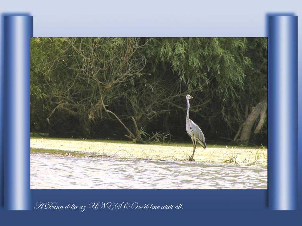 A Duna delta az UNESCO védelme alatt áll.
