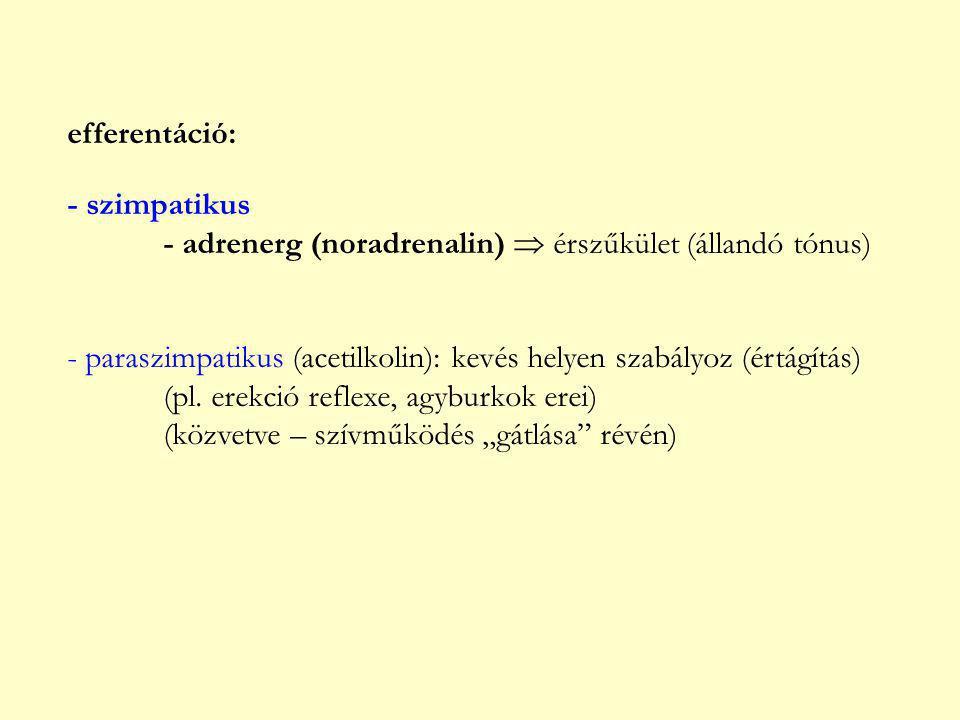 efferentáció: - szimpatikus. - adrenerg (noradrenalin)  érszűkület (állandó tónus)