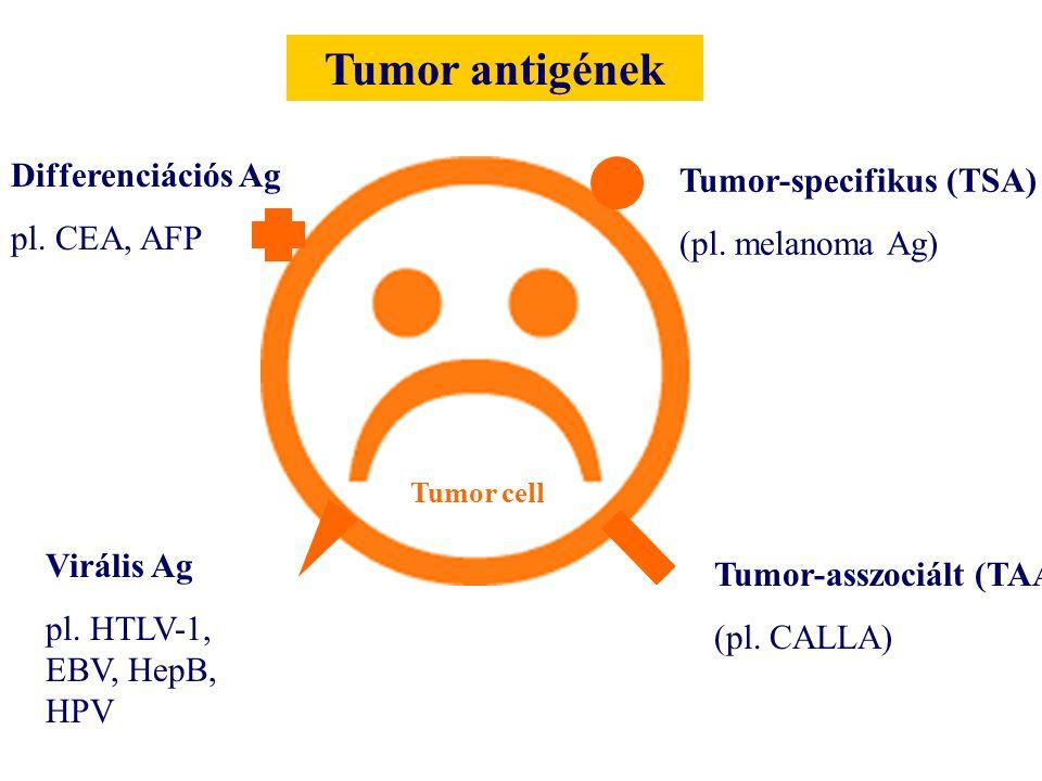 Tumor antigének Differenciációs Ag Tumor-specifikus (TSA) pl. CEA, AFP