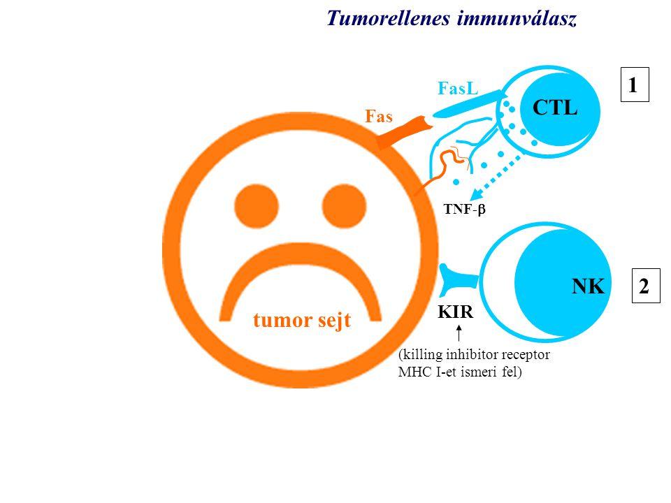 tumor Tumorellenes immunválasz 1 CTL NK 2 tumor sejt FasL Fas KIR