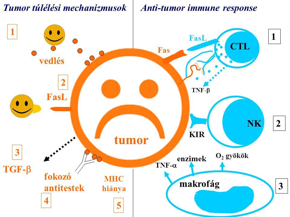 tumor tumor Tumor túlélési mechanizmusok Anti-tumor immune response 1