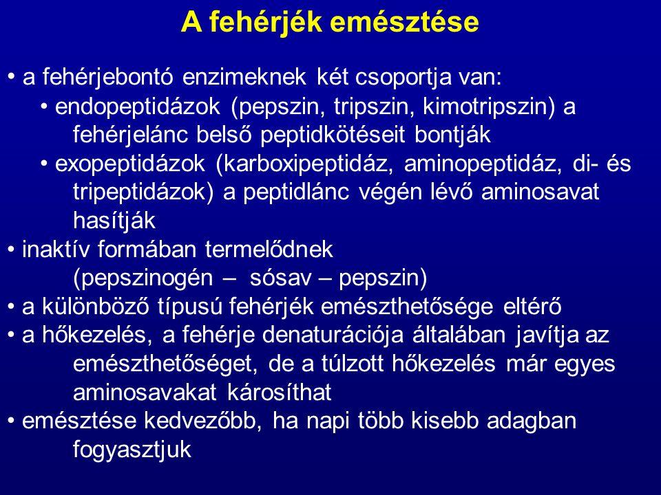 A fehérjék emésztése a fehérjebontó enzimeknek két csoportja van: