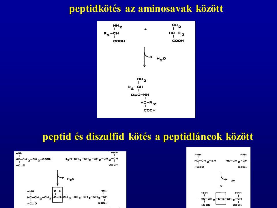 peptidkötés az aminosavak között
