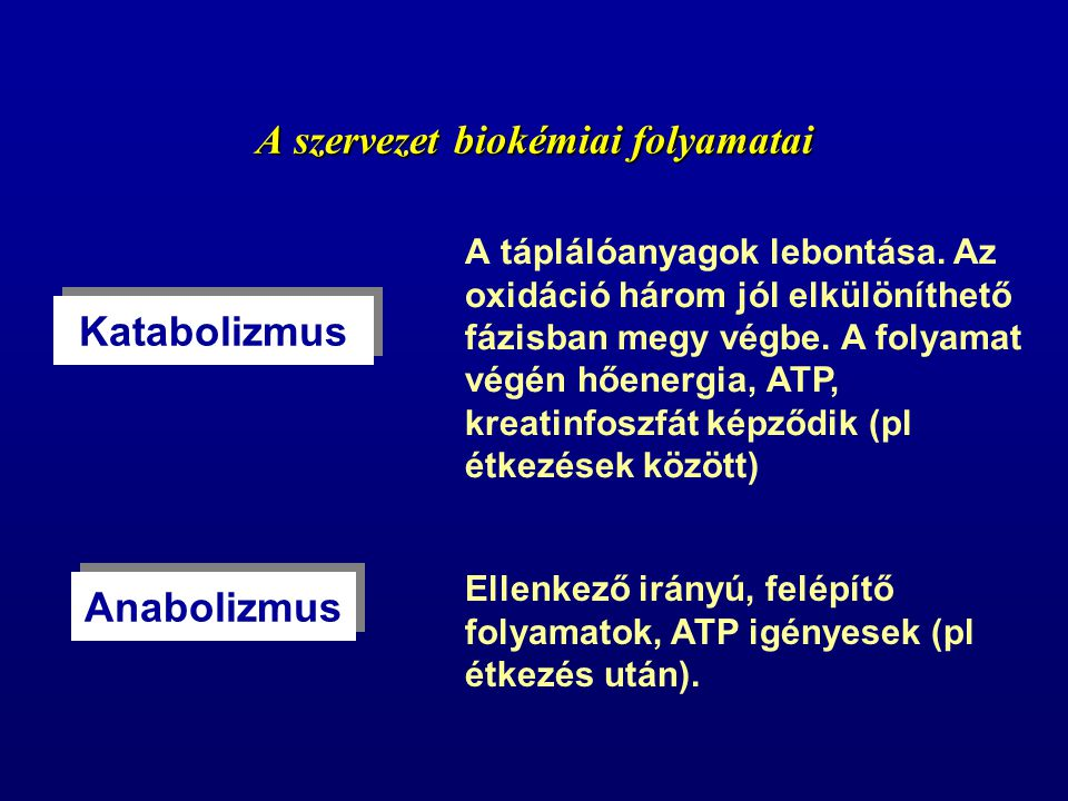 A szervezet biokémiai folyamatai