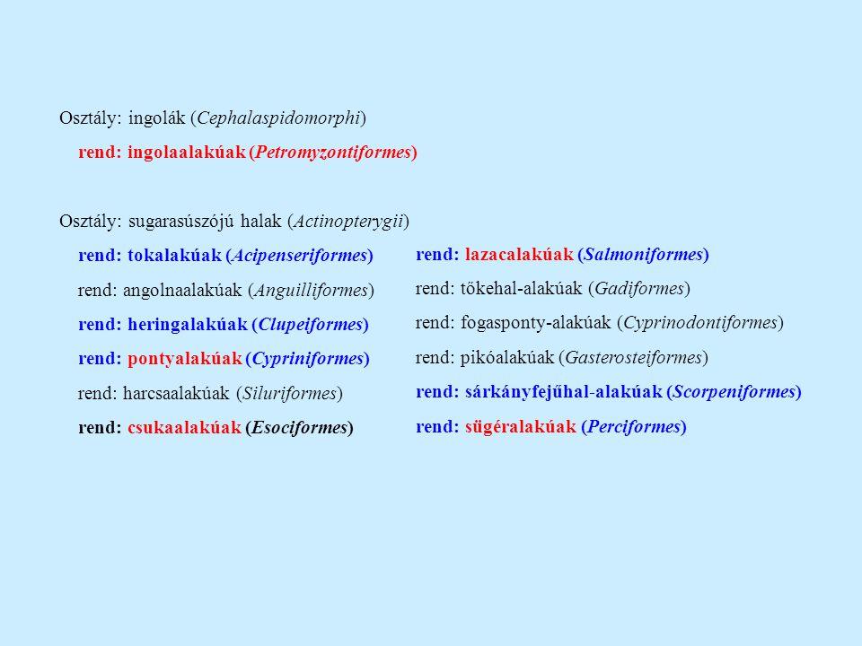 Osztály: ingolák (Cephalaspidomorphi)