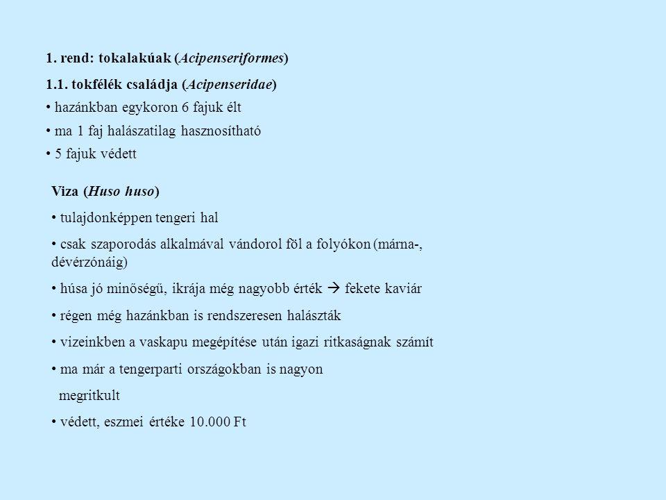 1. rend: tokalakúak (Acipenseriformes)