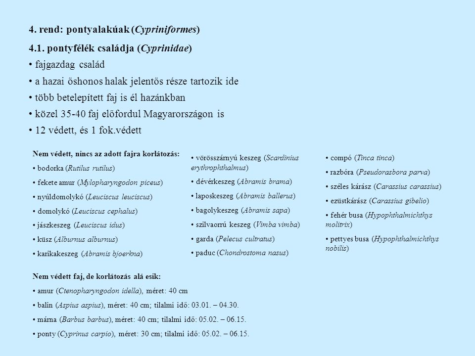 4. rend: pontyalakúak (Cypriniformes)