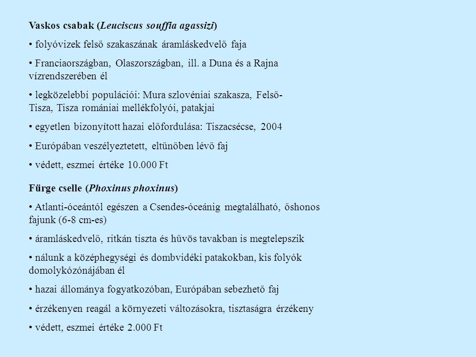 Vaskos csabak (Leuciscus souffia agassizi)